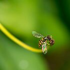 Hoverfly Visiting a Flower by MattMasterson