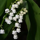 Lilies of the valley by Poete100