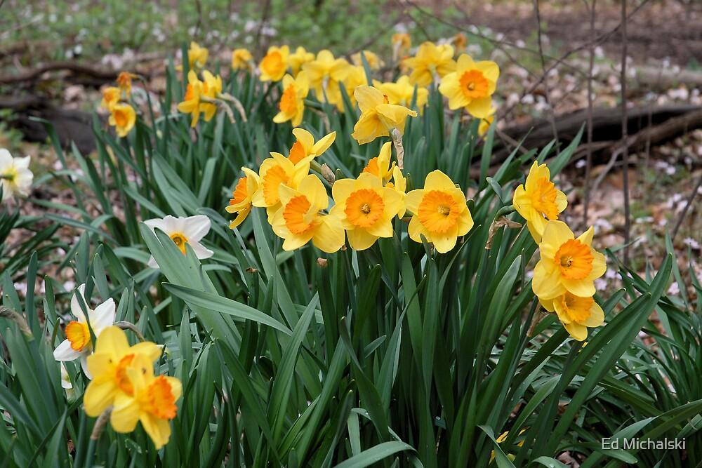 Spring flowers by Ed Michalski