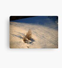 Winter Survival Canvas Print