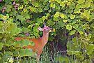 Deer Nibbling Wildflowers 2 by Yannik Hay