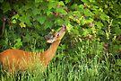 Deer Nibbling Wildflowers by Yannik Hay