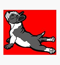 Boston Bull Terrier Puppy Black and White Photographic Print