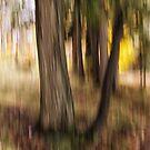 Trees -32 - Impressions by Yannik Hay