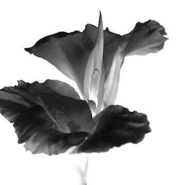 black lilli by FUSIONART