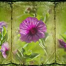 Purple Beauties (Morning Glory) by Yannik Hay