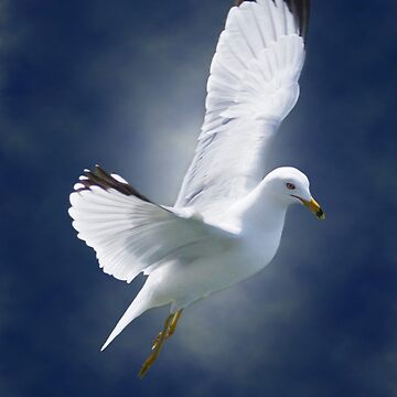 White Gull by Photograph2u
