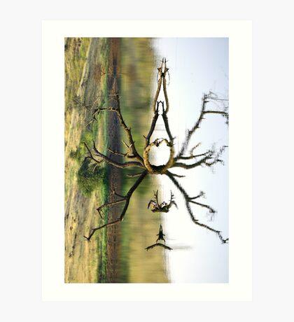 Illusion or reflection??? Art Print