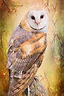 The Wise Owl by Yannik Hay