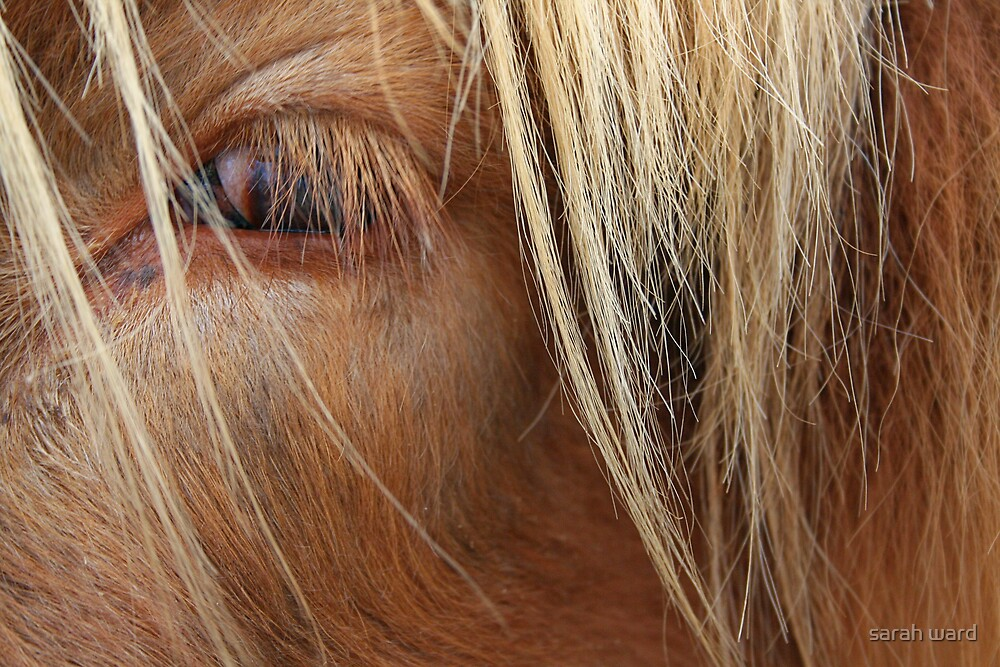 Fringe in the eyes by sarah ward