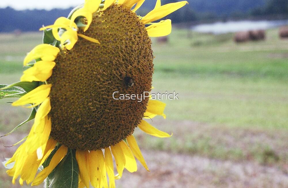 Sunflour 2 by CaseyPatrick