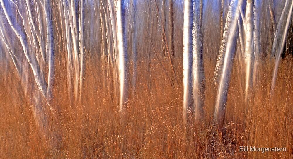 Spirit Birch by Bill Morgenstern