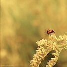 a bug's life by Aimelle