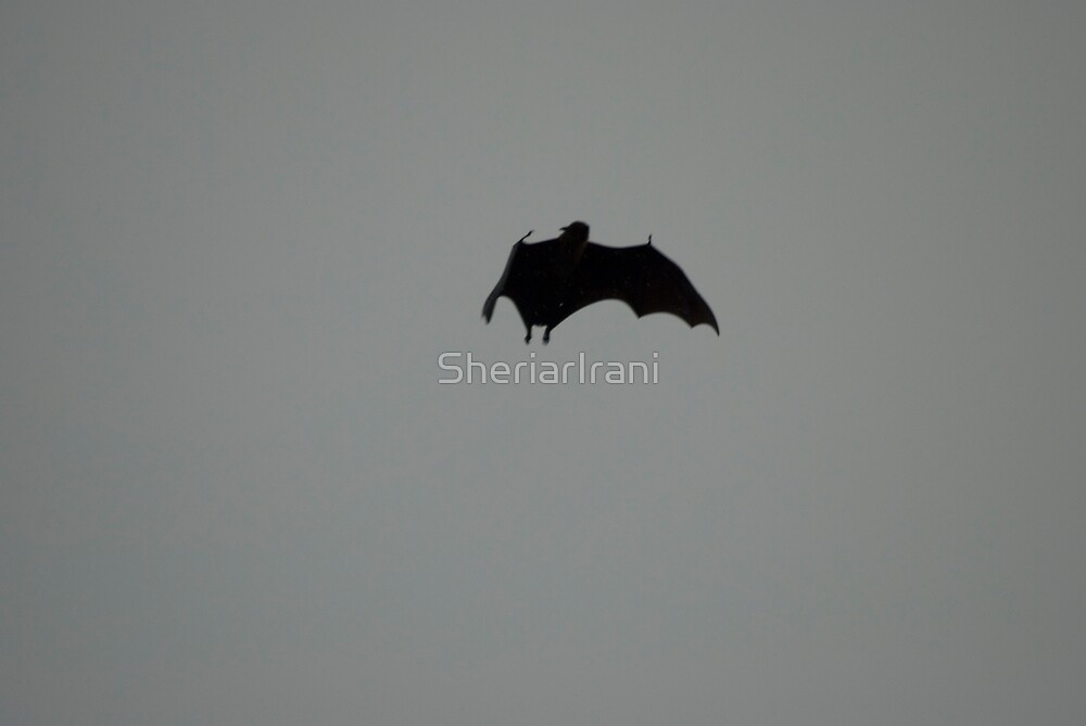 Bat silhoutted against the evening sky 3 by SheriarIrani