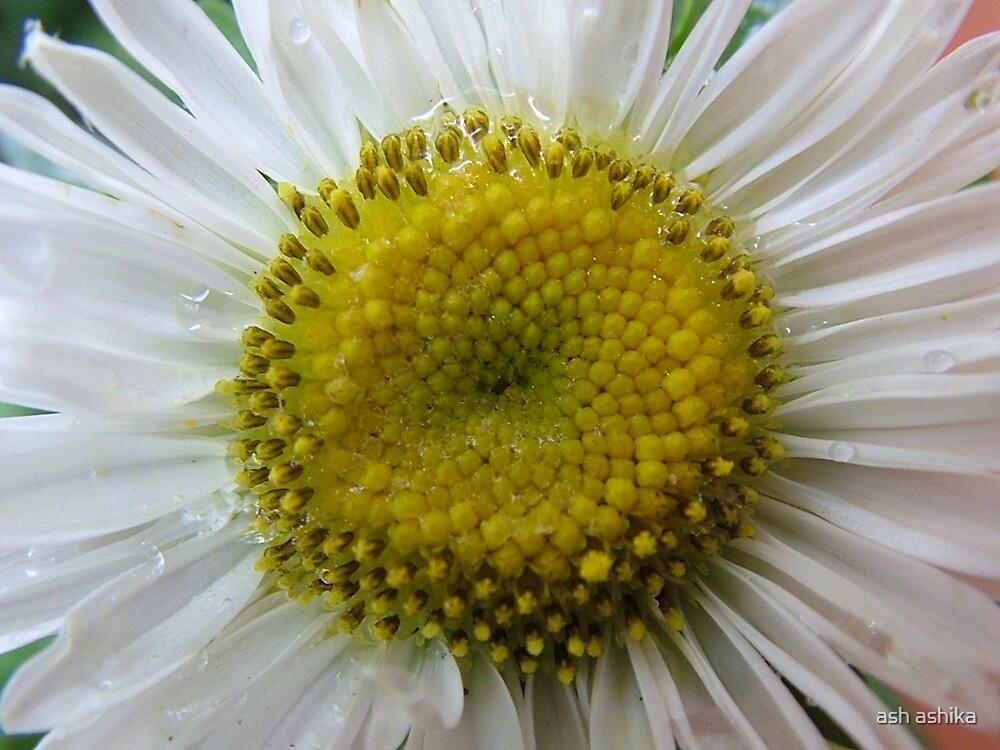 closeup........... by ash ashika