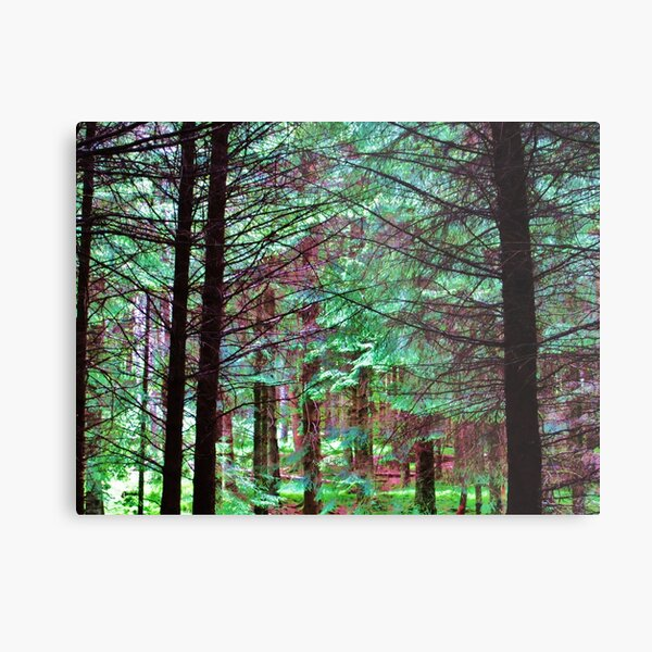 If You Go Down To The Woods Today.... Metal Print