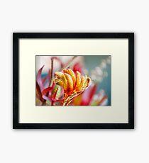 Kangaroo Paw Flower Framed Print