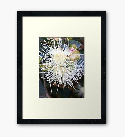 Starburst! Framed Print