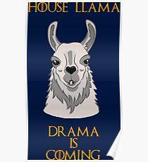 House Llama Poster