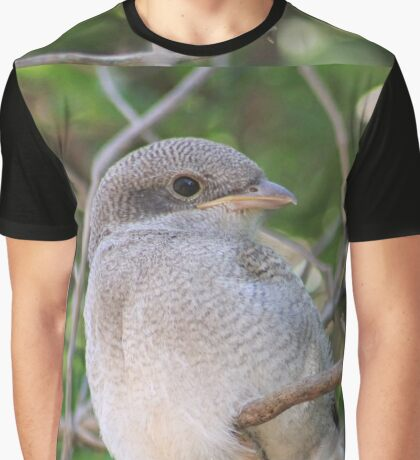 Fiscal Shrike Fledgling - One of four Graphic T-Shirt