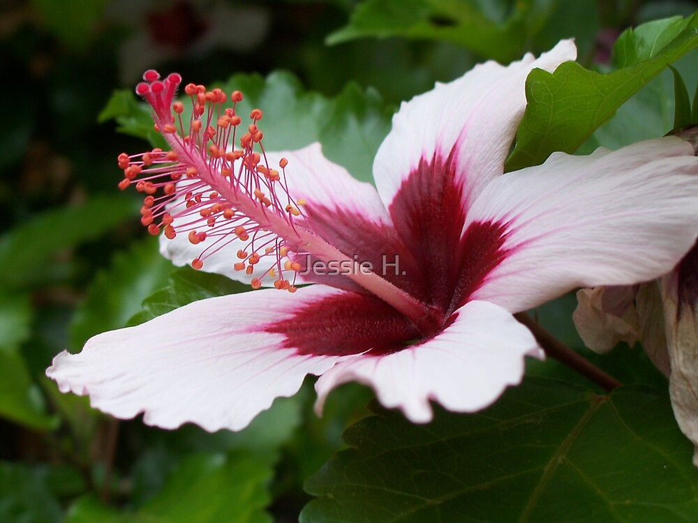 Pink flower by Jessie H.