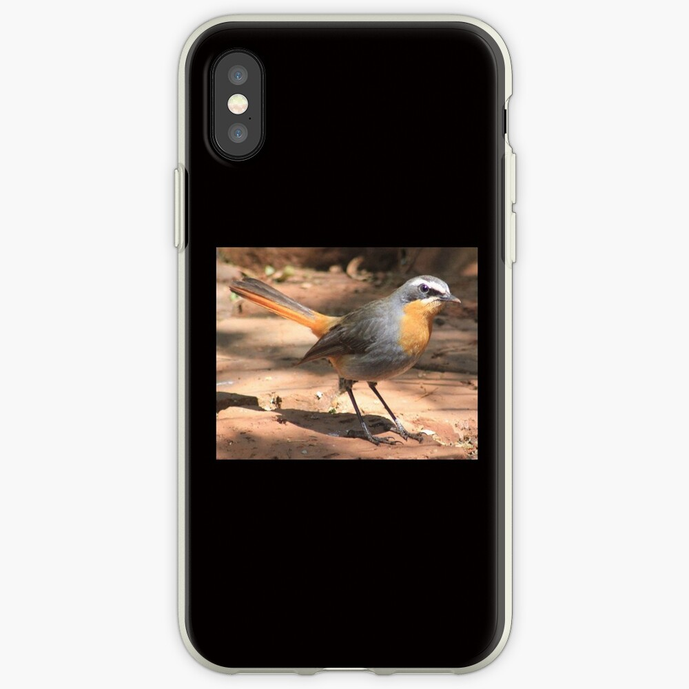 Cape Robin giving me the eye iPhone Case & Cover