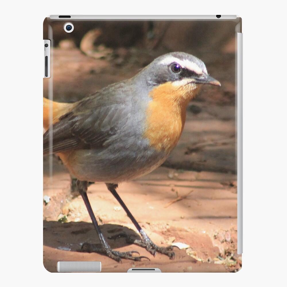 Cape Robin giving me the eye iPad Case & Skin