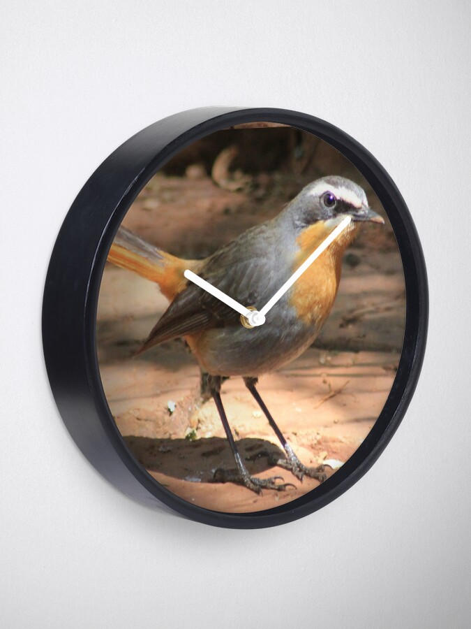 Alternate view of Cape Robin giving me the eye Clock