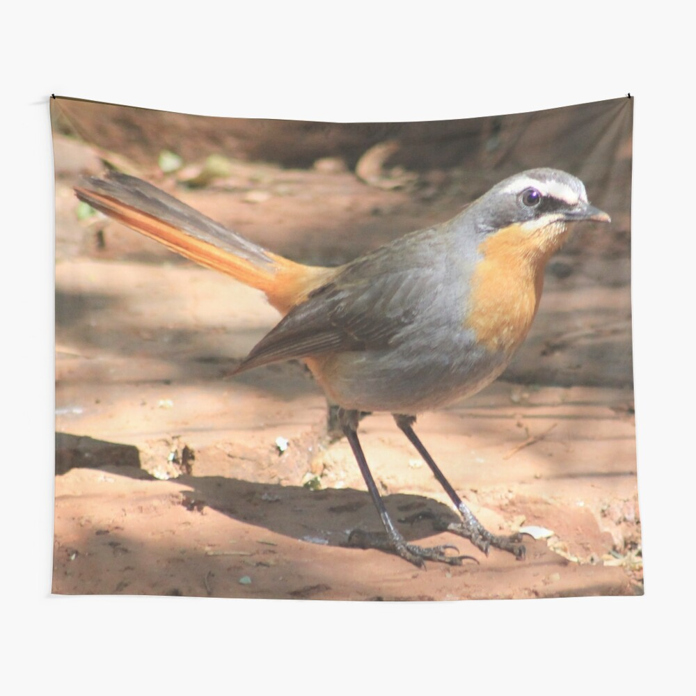 Cape Robin giving me the eye Wall Tapestry