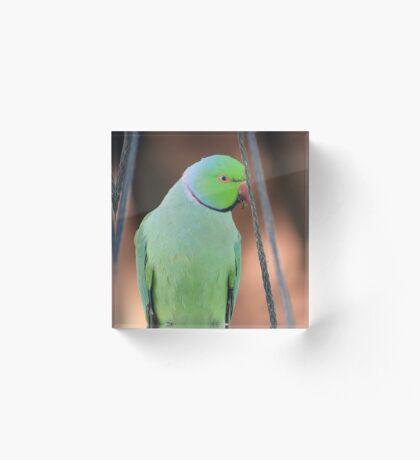 Indian Ringneck Parrot in my garden Acrylic Block