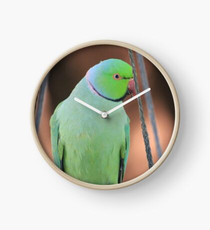 Indian Ringneck Parrot in my garden Clock
