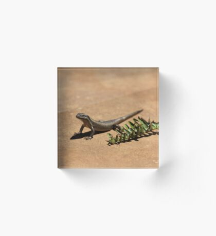 Interacting with wildlife - African Striped Skink Acrylic Block
