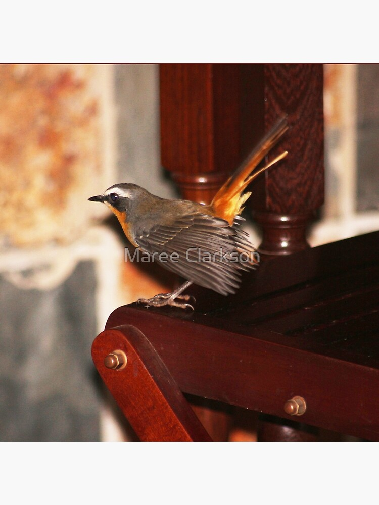 Robin in my house by MareeClarkson