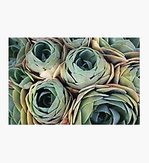Tightly packed Photographic Print