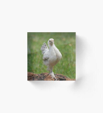 Farm talk - Snoodles, a chick with attitude! Acrylic Block