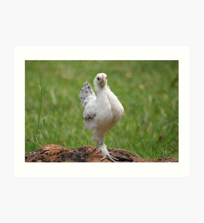 Farm talk - Snoodles, a chick with attitude! Art Print