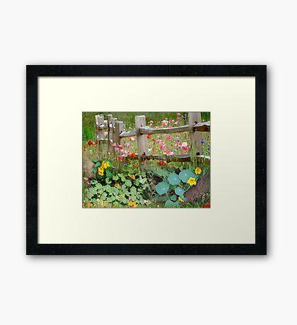 Nasturtium fields Framed Print
