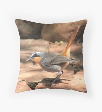 Cape Robin (Cossypha caffra) Throw Pillow
