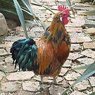 Farm talk - Half a beauty by Maree Clarkson