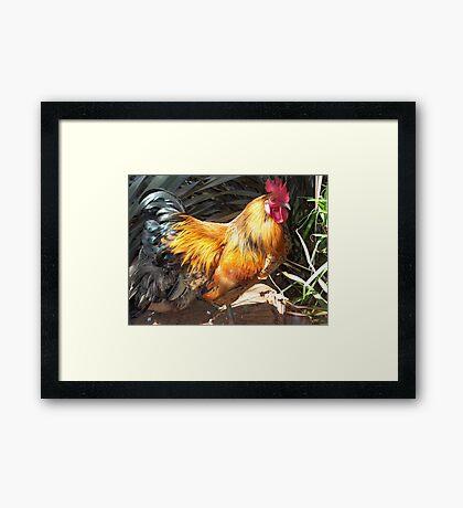 Farm talk - Artemis in glorious colour Framed Print