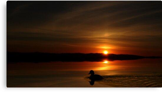 Sunset Duck by BluAlien