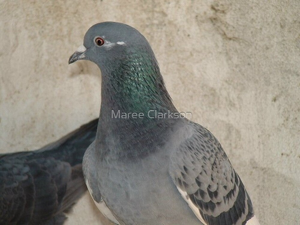 Mask - Love for Pigeons by Maree Clarkson