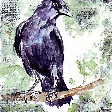 Crow wears a band of Silver - Coco by MareeClarkson