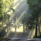 Morning sun at Mawbanna  by phillip wise