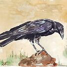 The Way of the Crow - Coco by Maree Clarkson