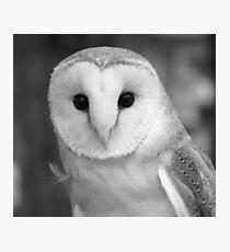 Curious Barn Owl (b&w) Photographic Print