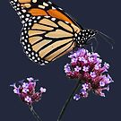 Monarch tee2/prints/products by hummingbirds