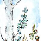 Eucalyptus and gum seeds - a fresh start - Botanical illustration by Maree Clarkson
