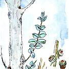 Eukalyptus und Gummisamen - ein Neuanfang - botanische Illustration von Maree Clarkson