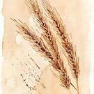 Golden Wheat - Botanical illustration by Maree Clarkson